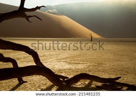 foggy morning in Dead Vlei (Namibia)  - stock photo