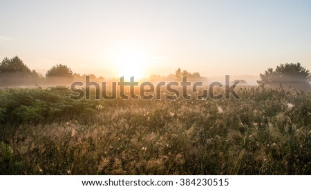 Foggy morning in the meadow with sun in summer - stock photo