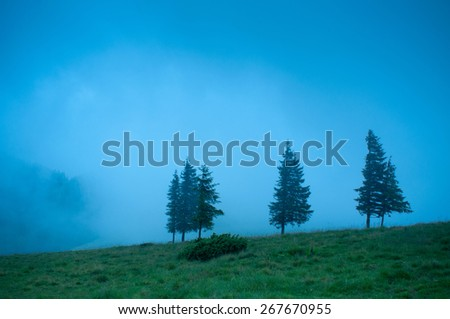 Foggy morning landscape with pine tree highland forest at Carpathian mountains.  - stock photo