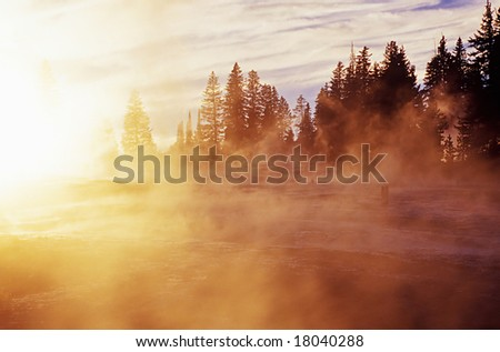 Foggy morning light in the woods - stock photo