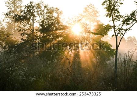 foggy morning mist summer landscape - stock photo