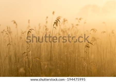 Foggy morning on meadow. sunrise landscape. - stock photo