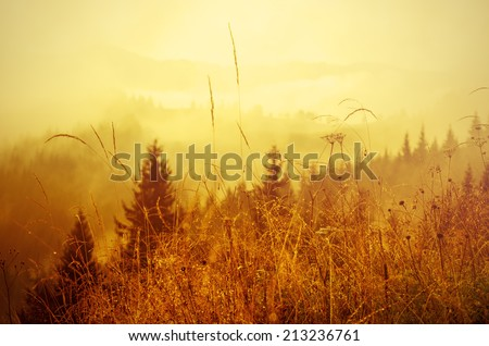 Foggy morning shiny summer landscape, amazing hipster background