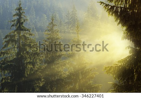 Foggy morning summer landscape with fir trees and sun rays, seasonal travel background - stock photo