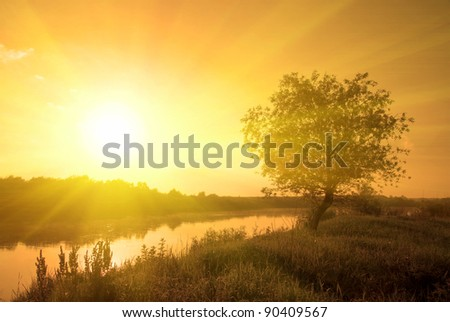 foggy morning sunny landscape with tree, grass and river - stock photo