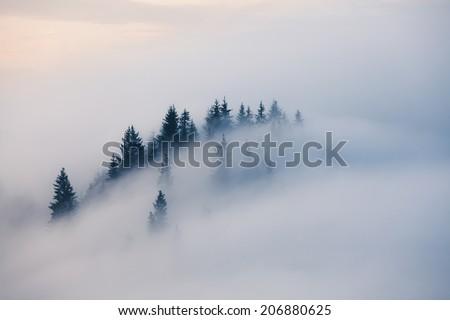 Foggy mountain landscape. Carpathian mountains, Ukraine - stock photo