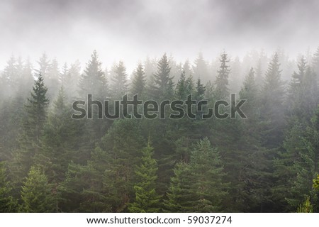 Foggy mountainside evergreen forest - layered pines in front of and behind fog - stock photo