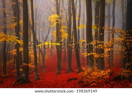 Foggy mystic forest during fall - stock photo