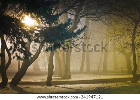 Foggy night in the park, wintertime - stock photo