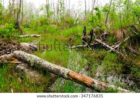 Foggy overgrown swamp or marsh woods early in the morning - stock photo