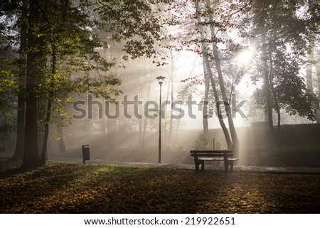 Foggy park in late autumn in the morning - stock photo