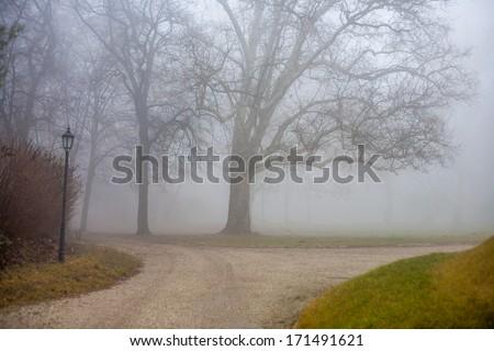 Foggy park in the  autumn - stock photo