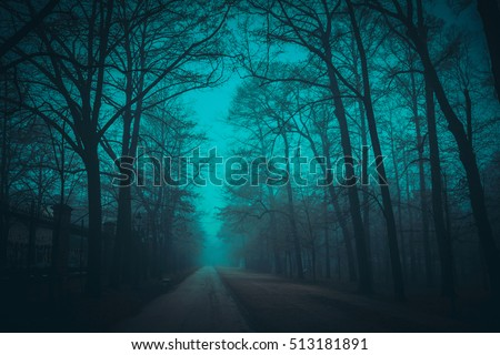 Foggy path in the park in night.