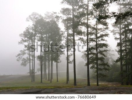 Foggy Pines - stock photo