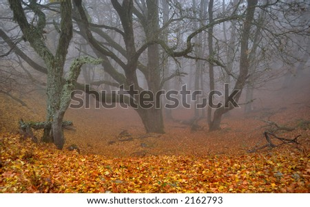 Foggy ravine in autumn forest in Crimean mountains