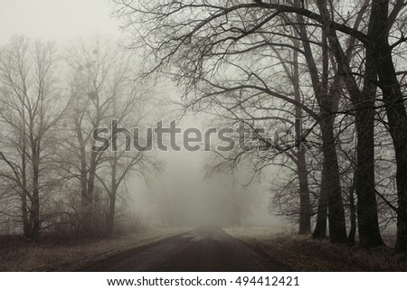 Foggy road and trees. Mysterious forest background. Early morning landscape, frost on the ground. noise film effect. horizontal photo