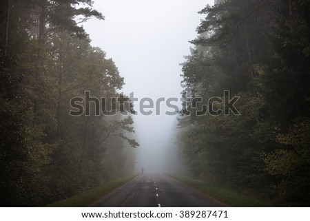 foggy road in autumn, outlines of trees with dark green leaves in mist - stock photo
