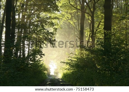 Foggy spring morning in the leafy woods highlighted by the rays of the sun. - stock photo