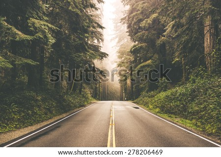 Foggy Straight Redwood Highway in Northern California, United States - stock photo