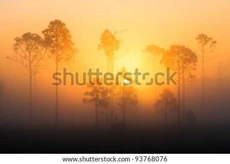 foggy sunrise in the forest - stock photo