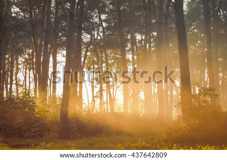 Foggy sunset forest, retro film filtered, instagram style - stock photo
