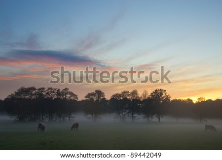 Foggy sunset over agricultural fields in the Netherlands.