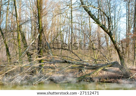 Foggy swamp - stock photo