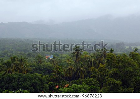 Foggy vegetation of Sri Lanka, lone house and barely visible hills in the background - stock photo