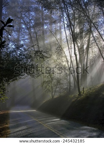 Foggy wet rainy morning road scene, sun coming through the trees