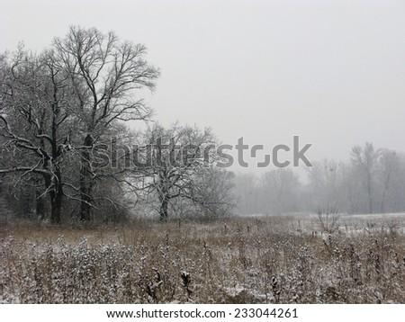 foggy winter landscape - stock photo