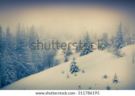 Foggy winter morning in the mountain forest. Retro style. - stock photo