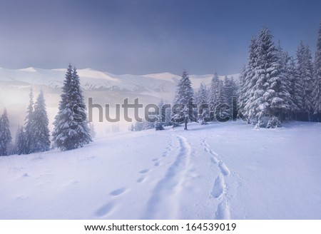 Foggy winter morning in the mountains - stock photo