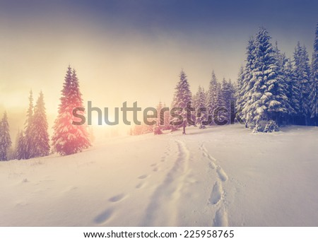 Foggy winter sunrise in the mountains. - stock photo