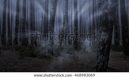 Foggy woods at dusk seeing last light rays.