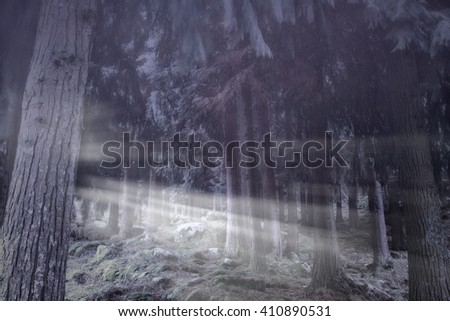 Foggy woods at dusk with sunbeams - stock photo