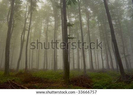 Foggy woods of Bulgaria