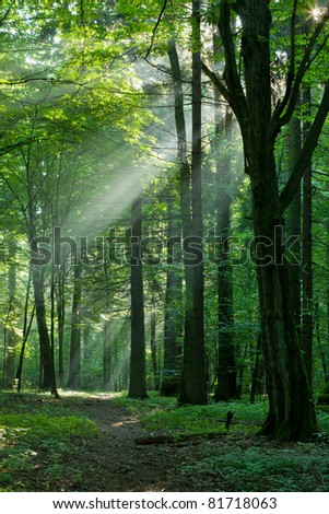 Foggy young forest at morning just rain after - stock photo