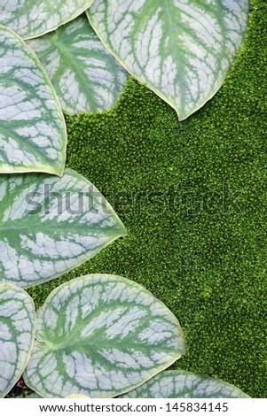 foliage and moss background. - stock photo
