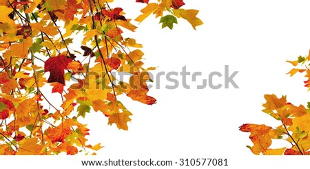 foliage in autumn colors on white background