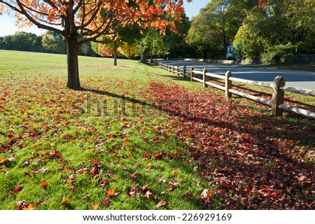 Foliage in Laz park, Boston - stock photo