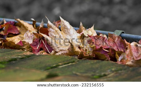 foliage in the rainwater gutter - stock photo