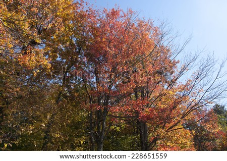 Foliage in Vermont, USA - stock photo