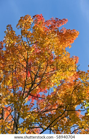 Foliage of an aspen against the sky in the autumn - stock photo