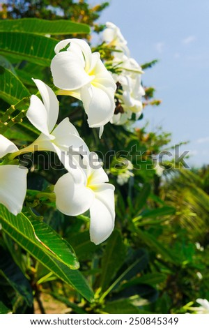 Foliage Sky Flower Perspective  - stock photo