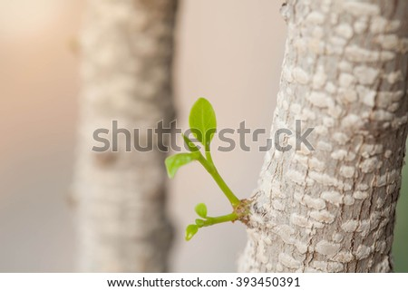 Foliage sprouting from tree, Selective Focus.