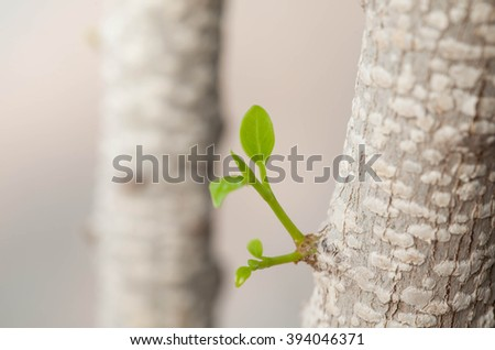 Foliage sprouting from tree, Selective Focus. - stock photo