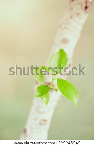 Foliage sprouting from tree, Selective Focus and Vintage Style. - stock photo