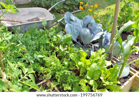 foliage vegetables in garden with  wheelbarrow and gardening tools - stock photo
