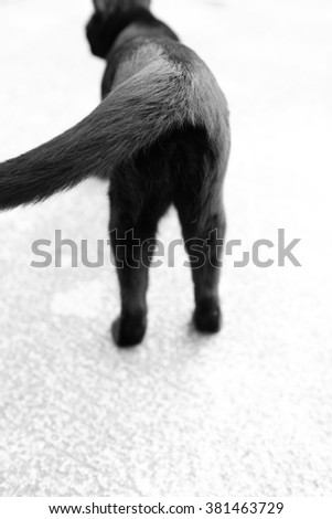 follow back cat out of focus