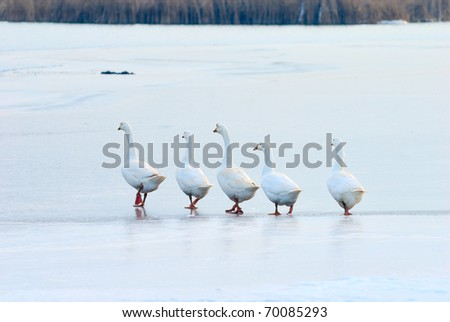 follow the leader on slippery and thin ice - stock photo